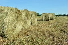 Round bales of hay Stock Photo