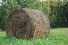 Round bales of hay freshly harvested in a field Stock Photos