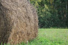 Round bales of hay freshly harvested in a field Royalty Free Stock Photos