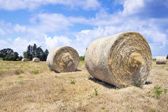 Round Bales of Hay Royalty Free Stock Photography