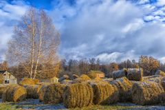 Round bales of hay lined up. Along a field Royalty Free Stock Images