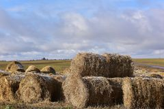 Round bales of hay lined up. Along a field Stock Image