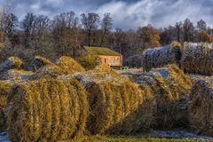 Round bales of hay lined up. Along a field Royalty Free Stock Image