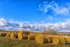 Round bales of hay lined up. Along a field Stock Photo