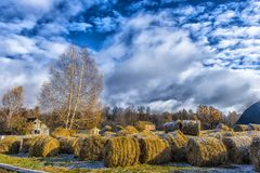 Round bales of hay lined up. Along a field Royalty Free Stock Photo