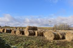 Round bales of hay lined up. Along a field Stock Images