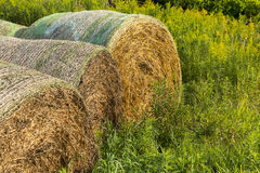 Round Bales Stock Photography