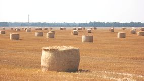 Round bales of hay. Straw and sunshine. August in countryside. Welcome back to motherland stock video footage