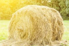 Round bales of hay under the hot sun on the field, livestock feed, agriculture, farm, beautiful natural background royalty free stock image