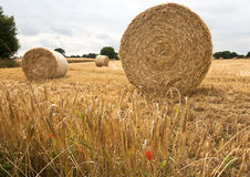 Round bales of hay in a wheatfield. Large round bales of hay in a recently harvested wheatfield with ripe wheat and a poppy in the foreground Royalty Free Stock Photos