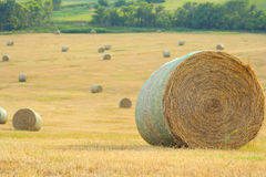 Round bales on hillside Stock Images