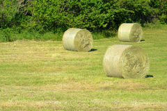 Round of bales Stock Images