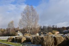 Free Round Bales Of Hay Lined Up Royalty Free Stock Image - 102683796