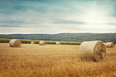Round bales of straw Stock Images