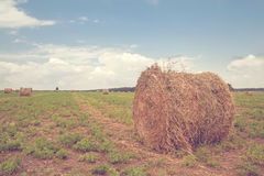 Round bales of straw on field Stock Photo
