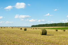 Round bales of straw grass Royalty Free Stock Image