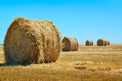 Round bales of straw lie in the field after harvesting Royalty Free Stock Image