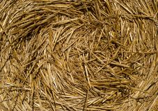 Round bales of straw lying in the field, shot taken close-up. stock photo