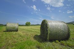 Round bales of straw in the meadow Stock Photo