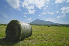 Round bales of straw in the meadow Stock Image