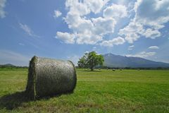 Round bales of straw in the meadow Royalty Free Stock Image