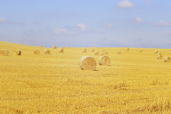Round bales of straw Royalty Free Stock Photography
