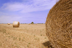 Round bales of straw in the meadow. With blue sky Stock Photos
