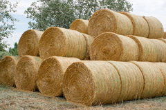 Round bales of straw. Royalty Free Stock Image