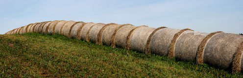 Round bales of straws Stock Photos