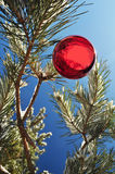 Round ball, Christmas. Balloon on the branches with snow, coniferous twigs, new year red decoration, close-up, holiday picture stock image
