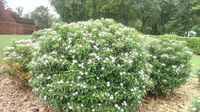 Round ball of white flowers Stock Photos
