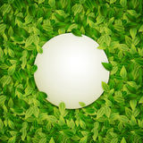 Round banner, green leaves background, vector illustration Royalty Free Stock Photos