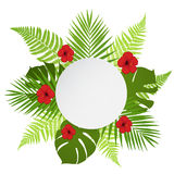 Round banner with palm, fern and hibiscus. Stock Photography