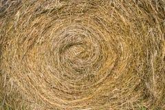 Round bela siana zbliżenie Zdjęcie Royalty Free