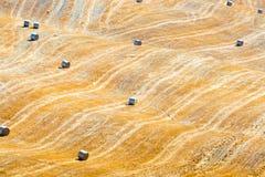 Round bele na cropped pszenicznym Tuscany, Włochy Fotografia Royalty Free