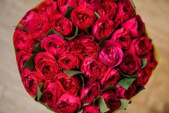 Round big romantic bouquet of red pion-shaped roses. For any case close up and isolated Royalty Free Stock Photo