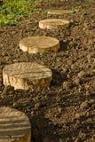 Round birchen stump Royalty Free Stock Photos