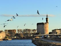 Round of birds in Aigues Mortes royalty free stock photography