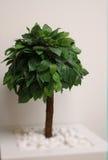 Round bonsai drzewo w kwadratowym kwiatu garnku Fotografia Royalty Free