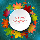 Round border of various autumn leaves on blue Royalty Free Stock Image