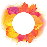 Round border of various autumn leaves  on white. Vector. Royalty Free Stock Photography