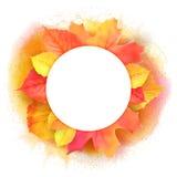 Round border of various autumn leaves  on white. Vector. Stock Photo