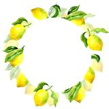 Round botanical frame with lemons and leaves. Watercolor hand drawn illustration stock illustration