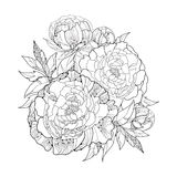 Round bouquet with five ornate peony flower and leaves isolated on white background. Floral elements in contour style. Stock Image