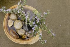 Water For the Birds and the Bee`s. Round brown used clay pot filled with rocks water and branch from a rosemary bush to providing water and pollen to birds and Stock Photo
