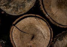 Round Brown Wooden Slab stock photos