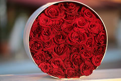 Round bunch of red roses. Beautiful splendid bright red roses flower bouquet in round box pretty bunch for celebration of anniversary valentine day marriage Stock Photography