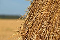 Round bundle of straw. The field is harvested. Sun is shining. Royalty Free Stock Images
