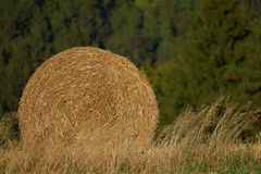 Round bundle of straw. Rural landscape with agricultural fields. The field is harvested. Sun is shining. Royalty Free Stock Photos