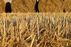 Round bundle of straw. Rural landscape with agricultural fields. The field is harvested. Sun is shining. Royalty Free Stock Photo